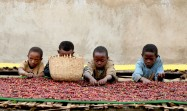 child sorting naturals, Adado - Ethiopia - By Coffee Inside