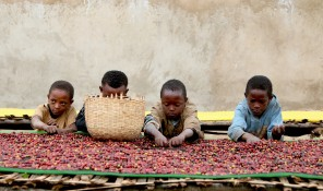 child sorting naturals, Adado - Ethiopia - By Coffee Inside
