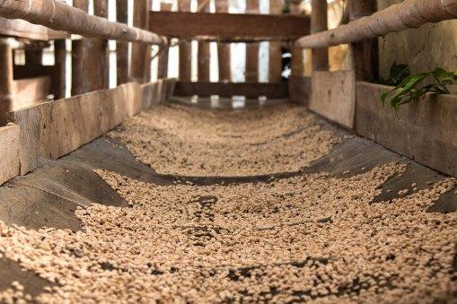 Coffe Processing at Region Cauca - Colombia - CoffeInside