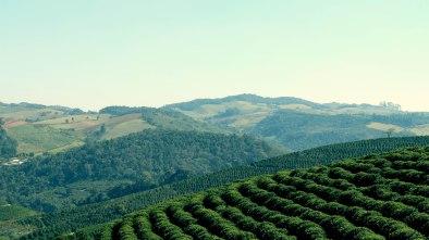 Coffee fram in Brazil - Coffee Inside