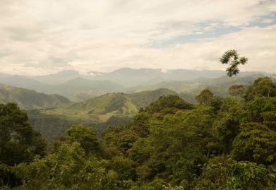 Coffee in Ecuador- CoffeeInside