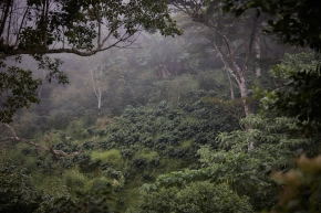 Coffee Mountain Coffee Farm - By CoffeeInside