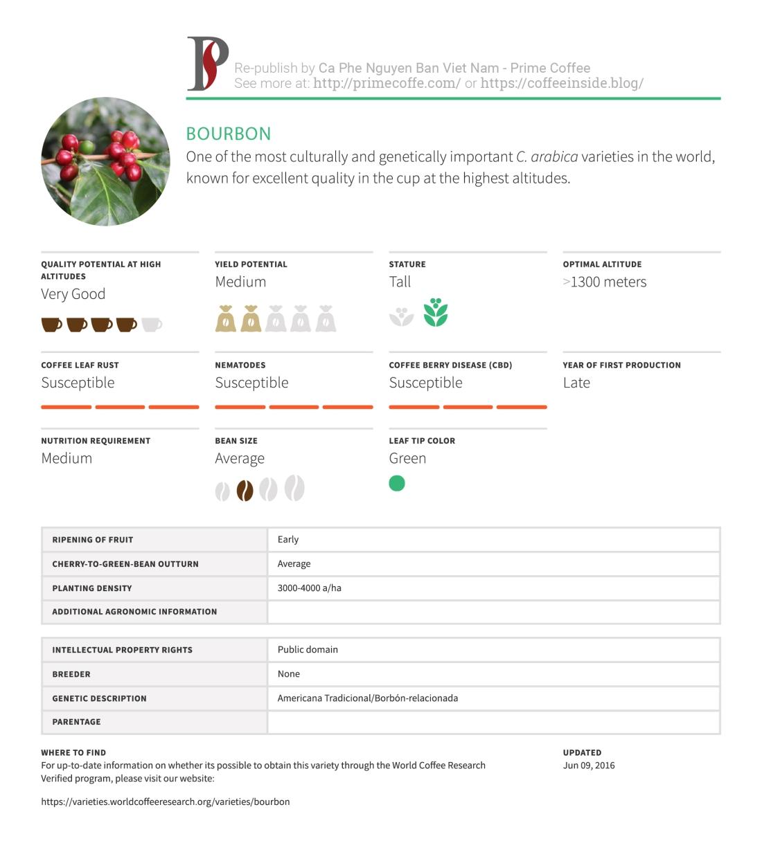 Coffee_Varieties_Bourbon_Infographic-Coffee-Inside