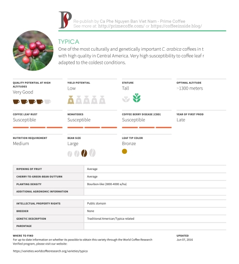 Coffee Varieties Typica Infographic Coffee Inside