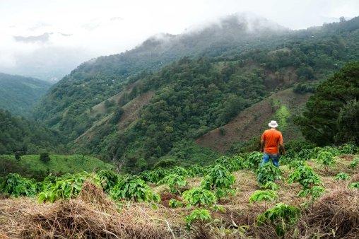 El Salvador Coffee - CoffeeInside
