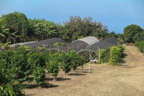 Farm coffee in Hawaii - Coffee Inside