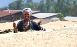 Farmer with coffee at Konga Region - Ethiopia