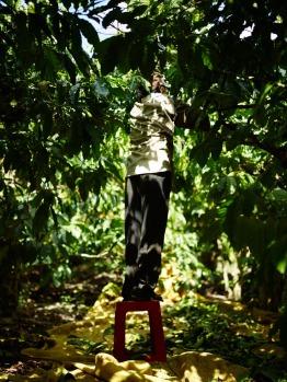 Farmer with Coffee Robusta in Kom Tum Viet Nam - CoffeeInside