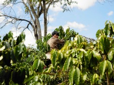 Farmer with Coffee Robusta in KomTum VietNam - CoffeeInside