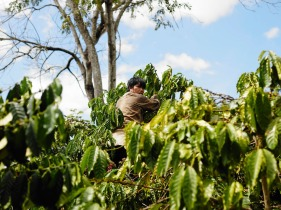 Farmer with Coffee Robusta in KomTum VietNam - CoffeeInside