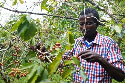Farmers at Yirgacheffe - Ethiopia - Coffee Inside
