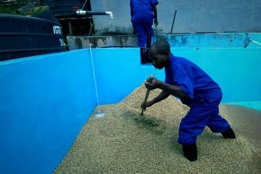 Nabobena Washing Station-in-Rwada-Prime-Coffee