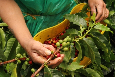 Pink Bourbon in Palestina, Huila - Colombia - Coffee-Inside