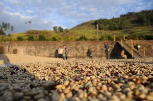Pulped Natural Brazil coffee - Coffee Inside