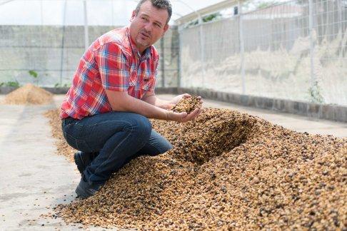 Pulped Natural Process -Semi-dry - Honey Process - Coffee Inside 1