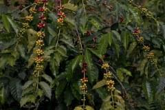 Region Cauca in Colombia CoffeeInside