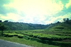 Rwandan-Countryside