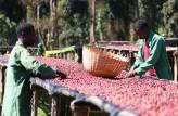 sorting naturals, Adado - Ethiopia