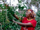 Wambui is among the many coffee pickers from Central Kenya