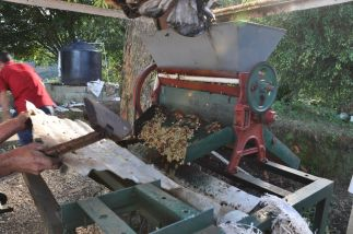 washed process coffee in Honduras - Coffee Inside