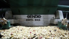 Wet Process - Washed Process -Coffee in Costarica - Coffee Inside