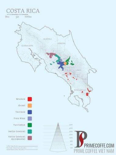 Word map coffee - Coffee in Costarica - CoffeeInside