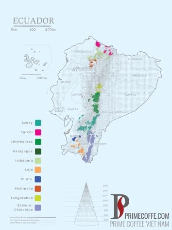 Word map coffee - Coffee in Ecuador- CoffeeInside