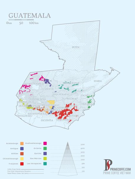 Word map coffee - Coffee in Guatemala - CoffeeInside