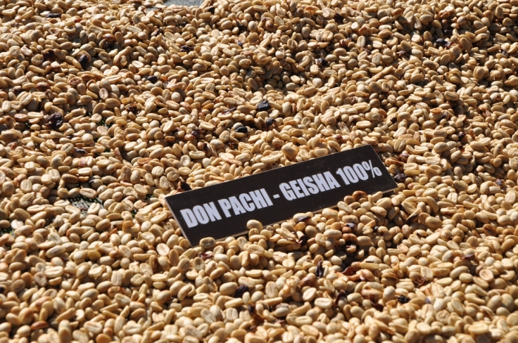 Don Pachi Estate drying beds - panama - by Coffee Inside