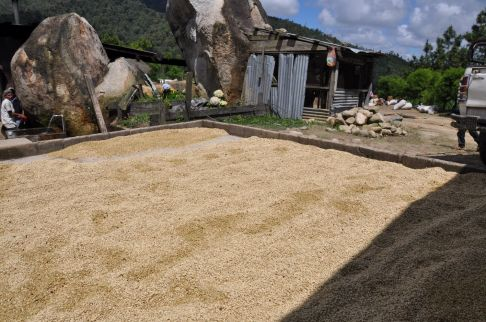 Drying beans in Nicaragua - Coffee Inside