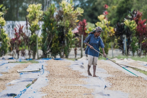 papua new guinea coffee drying - Coffee Inside