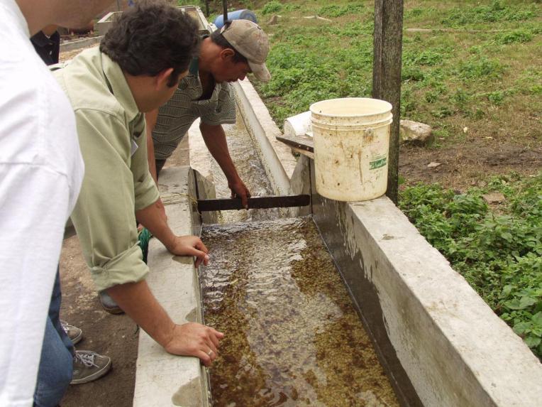 Washing Coffee Nicaragua - CoffeeInside
